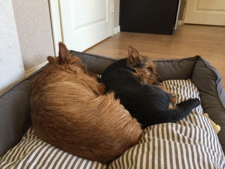 Best friends Börje & Buu